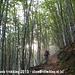 Wandeling door de bossen, omhoog richting Testa Mater
