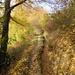 Herbst-Suonen-Impression 1