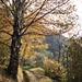 Herbst-Suonen-Impression 3