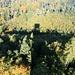 Tiefblick vom Turm in den herbstlich verfärbten Frienisberger Wald.