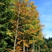 Herbststimmung im Frienisberg