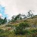Nach dem felsigen Abschnitt erreicht man den Wildelsigenkessel. Oben rechts Balmhorn.