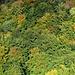 Jura-Herbstwald