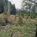 Die ersten Wälder!