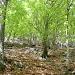 Der untere Teil unser Absteigsroute durch die Misoxer Buchenwälder.