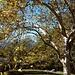 Una bella radura [A pretty zone]