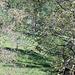 Un cavallo pascola beato [A happy horse grazing]