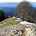 Kurz vor dem Gipfel des Schnebelhorn 1292m
