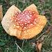 """Il famoso fungo """"cappellino da spiaggia"""""""