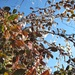 trocken ist's im Wallis - es wird bewässert; und gefriert ...