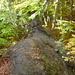 Kleiner Grat mitten im Wald