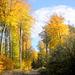 Nur für kurze Zeit im Jahr leuchtet der Wald so prächtig auf