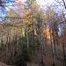 Herbststimmung im Rohrdorfer Tobel