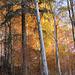 der Herbstwald leuchtet