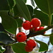 Früchte des Waldes