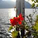 Farbtupfer am Seeufer in Gersau. Irgendwie muss man sich ja die Zeit bis zur Abfahrt des Busses vertreiben...;-)