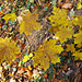 Herbstfarben im Vingelz Berg