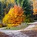 Farbenpracht Buchenwald 2