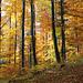Farbenpracht Buchenwald 3