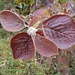 farbiger Herbst 1
