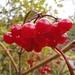 farbiger Herbst 2