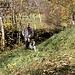Il sentiero inizia subito con un tratto ripido, incassato nel terreno e percorso da rigagnoli d'acqua dovuti alle intense precipitazioni dei giorni scorsi. La temperatura si alza velocemente: è veramente molto mite per la stagione. Dopo aver scambiato quattro chiacchiere con un cacciatore, proseguiamo passando davanti ad una cappella con un bassorilievo della Madonna (1030 m).