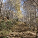 Dopo la bolla, il sentiero diventa più ampio: sale dolcemente in un bosco di betulle fino a raggiungere un abbeveratoio.