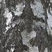interessante Baumstruktur