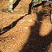 herbstliche Schattenimpression