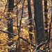 Herbstwald auf dem Uetliberg