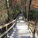 Treppenweg Richtung Albisguetli