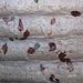 Blättertapete