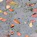 die Blätter schweben auf der Wasseroberfläche