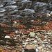 Wasser, Laub und Stein bilden interessante Kontraste