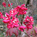 Pfaffenhütchen,  eine in allen Pflanzenteilen giftige Pflanze, aber ein schöner herbstlicher Farbtupfer
