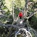 [u Lena] im Schlussaufstieg zum Rotberg. Es gilt, den Bäumen und Ästen auszuweichen, so gut es geht...