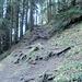 im Wald oberhalb Schimbrig Bad (Sommerweg)