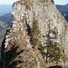 Hengst (schmaler Übergang und kurze Kletterstelle)