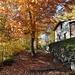 Herbstliche Wälder.