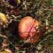 Herbstliche Wälder: ein Fliegenpilz.