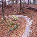 Hier hat es Keltengräber und so wurde der Trail in diesem Jahr befestigt um Erodierungen zu vermeiden.