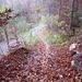 Steile Einfahrt in einen Waldweg mit etwa 300m folgender flacher Passage bevor es dann nochmal zur Sache geht.