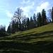 Kurz danach öffnet sich der Wald und die Rind-Alpe rückt näher.