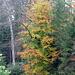 Herbstlich Farben