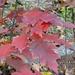 Herbstfarben und -formen erfreuen uns