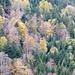noch schmücken bunte Blätter die Wälder am Fuße des Fluebrigs