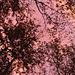 magische Morgenstimmung im Schlunenwald