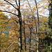 Abstieg durch den Herbstwald