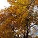 Herbststimmung im Schlunenwald