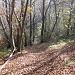 Dopo Albero di Sella il sentiero scende per qualche metro.